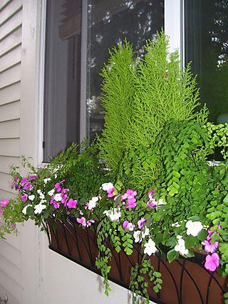 Garden August 6, 2008 006