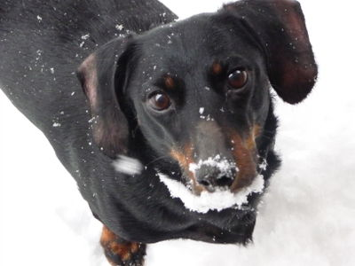 Snow dec 2008 154