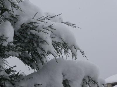 Snow dec 2008 144