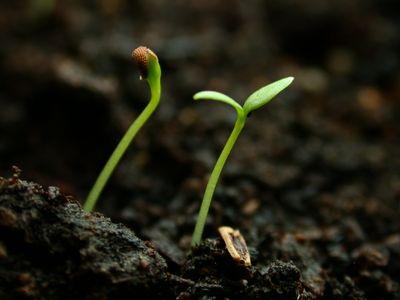 Seedlings_014