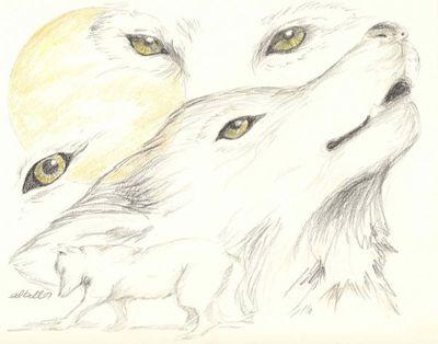Wolf-sketches