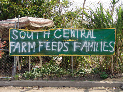 South_central_farm_feeds_families