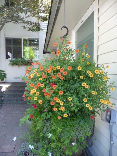 Garden in the Last Days of August 015