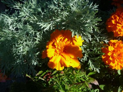 Garden in the Last Days of August 018