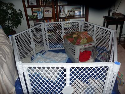 Kate & Cory 3 year anniversary - bible - dog playpen 007